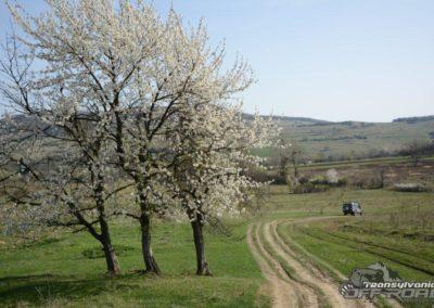 Transylvanian Spring Landscape