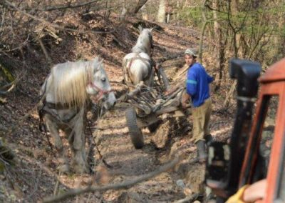 Logging Horses in Romania